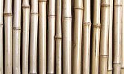 Rolled Tonkin Bamboo Fence